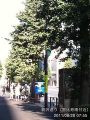 朝散歩(2011/8/28): 駒沢通り