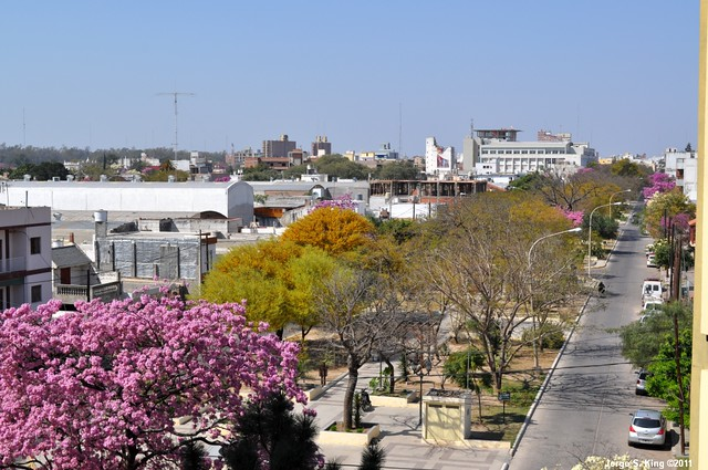 Lapachos 2011 XXVIII