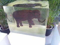 新・港村の動物園5-BankART LifeⅢの写真