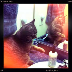 Jacksons, August 28, 2011 (Maggie Osterberg) Tags: reflection cat bathroom mirror kitten nebraska jackson lincoln  iphone selfawareness maggieo mirrortest hipstamatic pistilfilm chunkylens evidenceofsentience