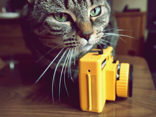 the Cat & the Holga