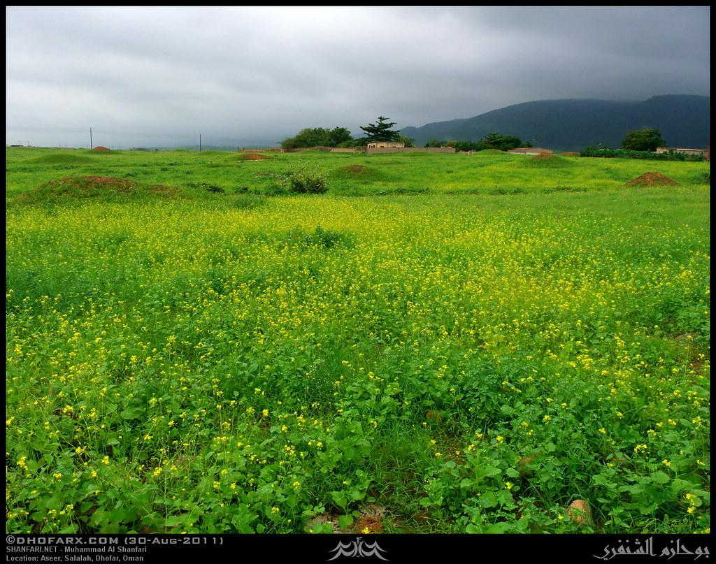 وعقبة أسير ظفار، بتاريخ 30-8-2011 6098839634_938877ef1