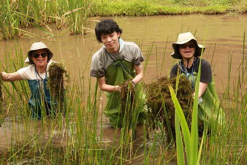 汪偉(中)來台期間,參與陽明山工作假期,協助維護二子坪濕地