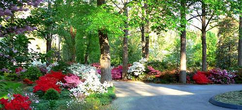 Flower Drive