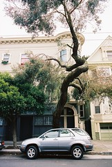 Protected parking spot (sf eyes) Tags: film parking foundinsf contax167mt gwsf treesontuesday
