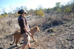 FC Blog Sam Towne Walking with Lion 2