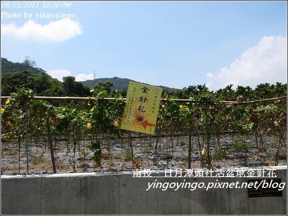 南投魚池_頭社活盆地金針花20110821_R0041586