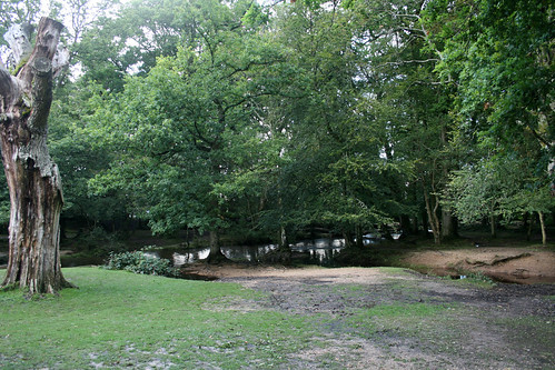 New Forest 19