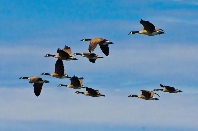 Fling V over Edmonds Marina, Washington