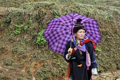 63_LAO79030086 (TC Yuen) Tags: vietnam sapa hmong terracefarming locai