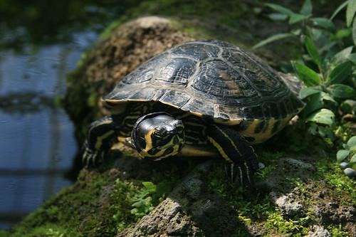 Schildkröte / Turtle - CloseUp