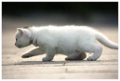 Gatito (Cruces del Sur) Tags: blanco kid withe kitty gato chiquito pelitos pelillos modocaza
