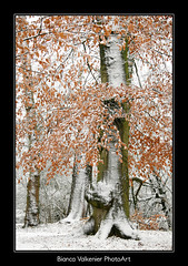 BVF171210-2342 (Bianca Valkenier PhotoArt) Tags: winter bomen sneeuw nederland natuur bos winters landschap kou koud gelderland sneeuwvlokken betuwe seizoen winterlandschap hemmen sfeervol winterweer sneeuwoverlast