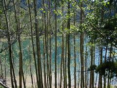 Happy Treemendus Tuesday (Mr. Happy Face - Peace :)) Tags: kananaskis country beautiful landscape alberta canada art2017