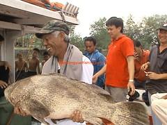20100506 (fymac@live.com) Tags: mackerel fishing redsnapper shimano pancing angling daiwa tenggiri sarawaktourism sarawakfishing malaysiafishing borneotour malaysiaangling jiggingmaster