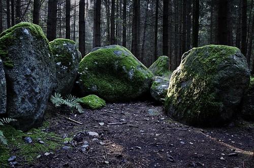 Großsteingrab Everstorfer Forst Süd 4