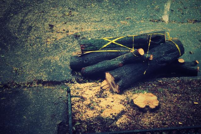 Tree_Trim_07