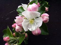 P.22 Blossom