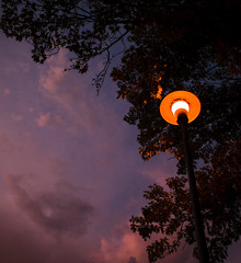 The Lamp (Gryffngurl) Tags: california light nature clouds evening pretty unitedstates streetlamp central northern wow1 wow2 wow3 ringexcellence blinkagain