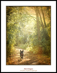 scamper (seve) Tags: park trees england art texture dogs forest photography mac aperture woods niceshot flash country competition running lancashire leigh textured pennington stevegregory 180550mm borderfx mygearandme bedfordmethodistchurch ringexcellence pse9 applecrypt aboveandbeyondlevel1 wwwflickrcomphotosapplecrypt