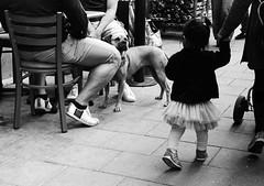 Hello doggy (fummel) Tags: street bw dog film analog child stockholm candid rangefinder russian jupiter8 zorki4k d7611 filmdev:recipe=8050