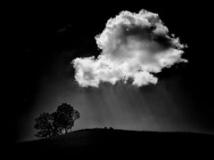 I Wandered Lonely... (Jeff Damron) Tags: trees blackandwhite bw cloud minimalist wordsworth lr3 olympuse620 niksilverefexpro2