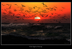 First flight of the day (david.gill12) Tags: sunrise southafrica gannets kzn