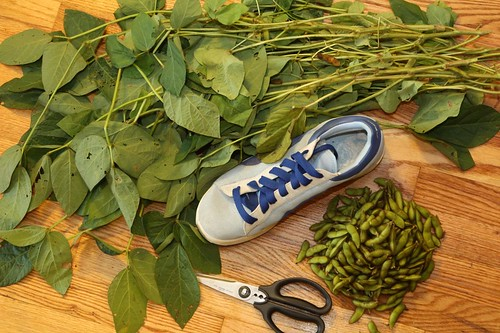 Edamame Pods Separated with Shoe