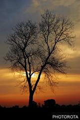NATURE (PHOTOROTA) Tags: pakistan sunset nature colors canon landscape 5d abid greatphotographers concordians photorota