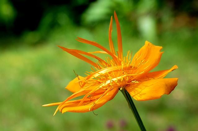 Flower, Alpena