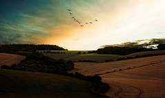 The farmer looked on with a jealous stare (Christo Nicolle) Tags: geese sundown valley crops vformation