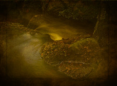 She floats slowly through the woods (Master Pedda http://petersamuelsson.se/) Tags: texture water forest woods stream sweden halland mygearandme ringexcellence