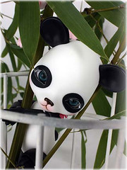 Want! (Runs for Coffee) Tags: panda want bjd pepe dollfactory