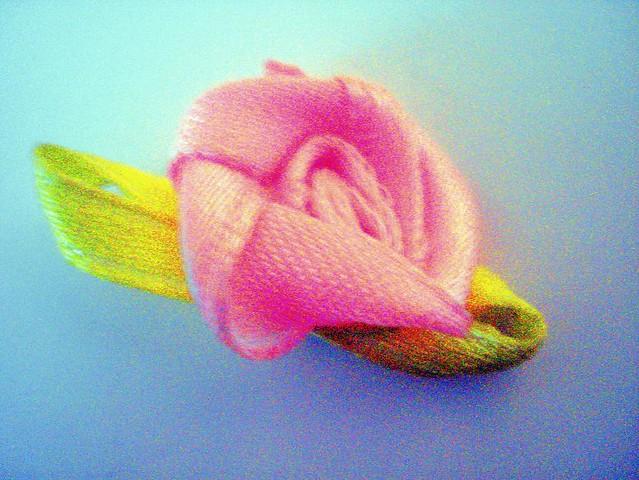 Rosa liviana