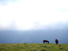 the new raemon:algunas personas del valle (visualpanic) Tags: summer sky horses horse grass clouds spain asturias cel ciel silence cielo nubes verano espagne llanes silencio chevaux nuvols hierba asturies 2011 silences estiiu