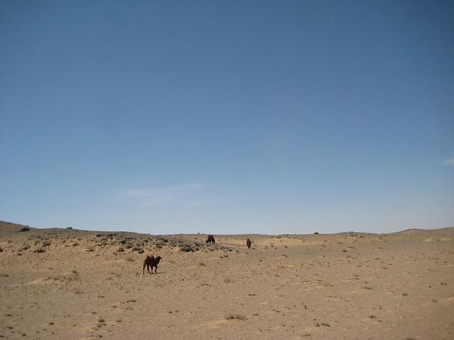 Пейзаж с верблюдами