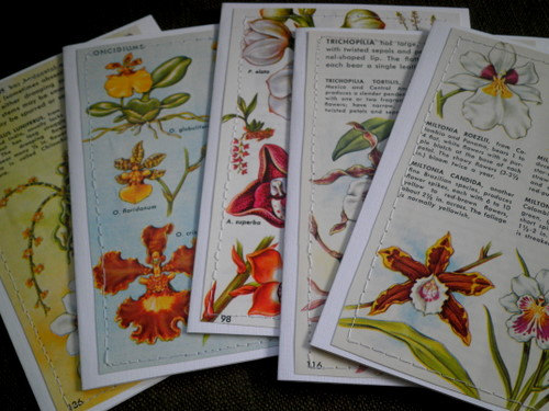 orchid cards