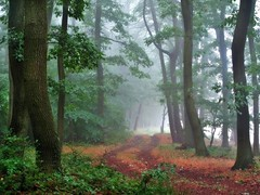 No.600 (BphotoR) Tags: bphotor wald forest mist fog nebel germany g10 powershot path weg dda mygearandme mygearandmepremium abigfave supershot naturesfinest anawesomeshot naturepoetry