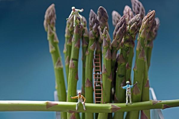 asparagus painters