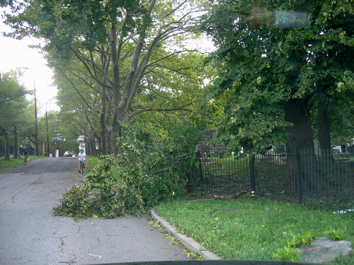 Fallen tree, after Irene
