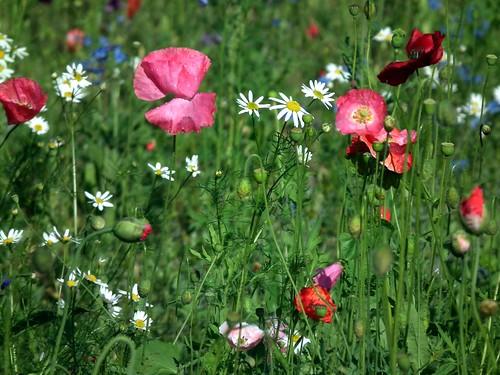 Kukkia Rantakallionpuistossa