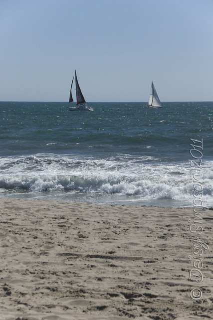 D1 venice beach sail boats
