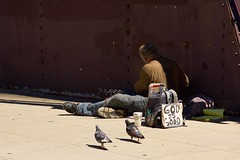 Homeless Man and Pidgeons IMG_7208 (www.cemillerphotography.com) Tags: poverty broken want need broke destitute itinerant bankrupt starving pauper indigent penniless insolvency privation