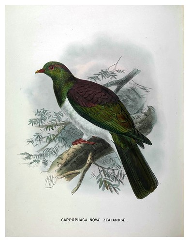 011-A History of the Birds of New Zealand 1873-Sir Walter Lawry Buller