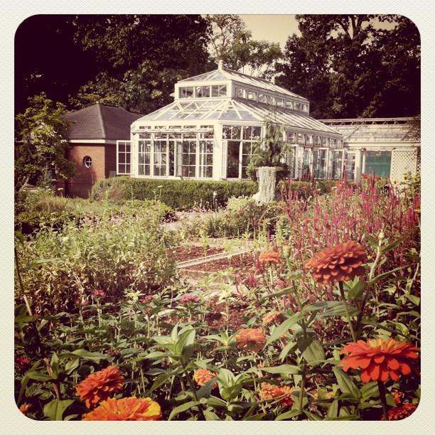 Dixon garden