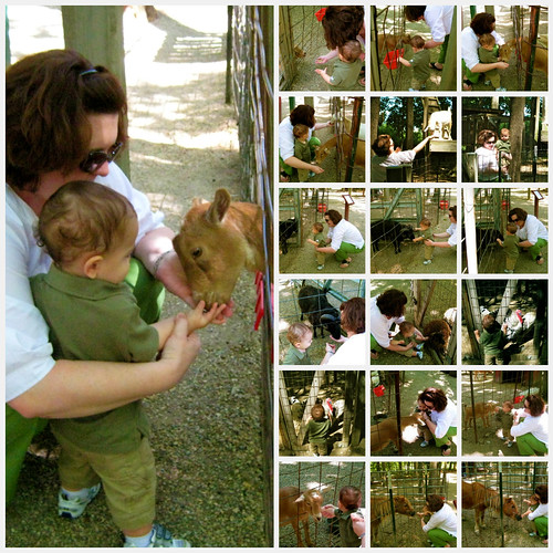 Petting Zoo Collage