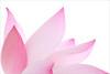 Lotus Flower - IMG_6050-1000 (Bahman Farzad) Tags: pink flower macro yoga peace waterlily lotus relaxing peaceful meditation therapy lotusflower lotuspetal lotuspetals lotusflowerpetals lotusflowerpetal