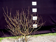 MM.106 EMLA Tree