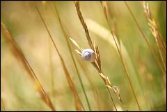 petit escargot grimpeur (Yddefix) Tags: jaune vent snail t blanc escargot cadre champ petit escalade bl fixer suspendre grimpeur scher dydylachance