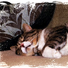Happy Dreams~ (texym11-in and out :)) Tags: texture cat chat tabby gato adopted tre sept loved katzen rescued tomcat 2011 fiv threelegcat sleepingthroughtherain